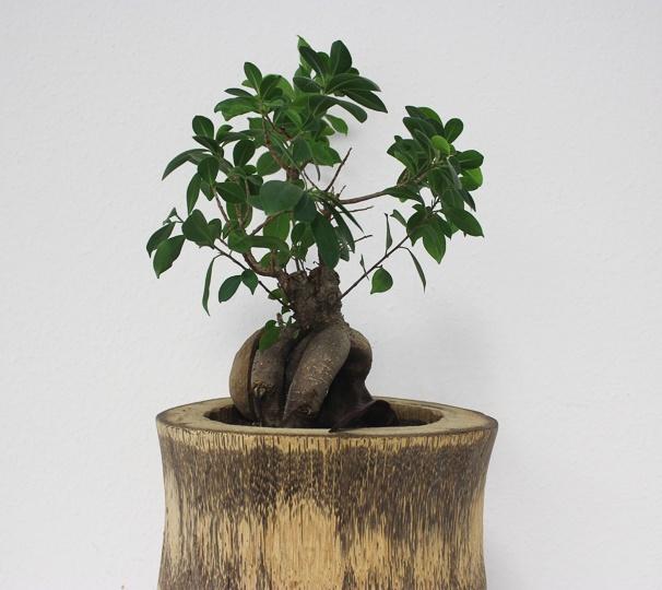 #10 piante al lavoro